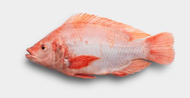 Fisk certifierad